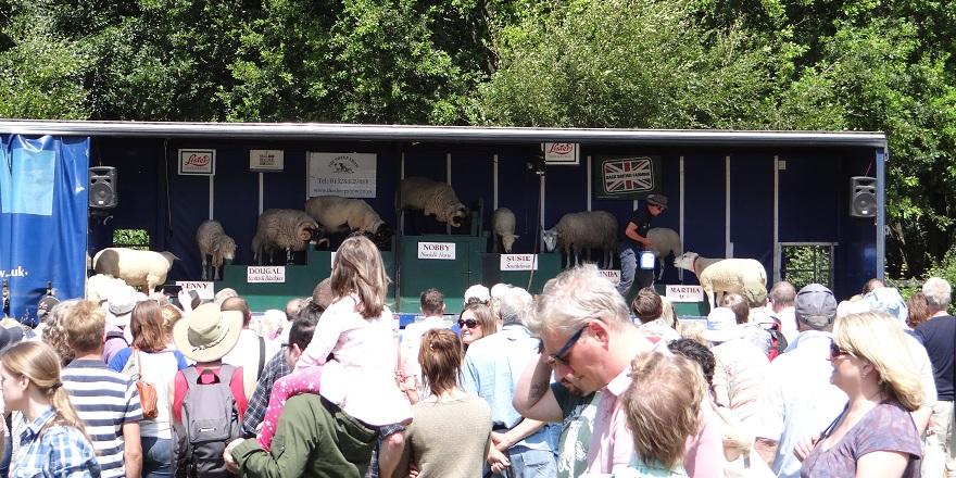 Sheep Show Shuffle