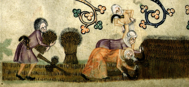 Women reaping. From the Luttrell Psalter