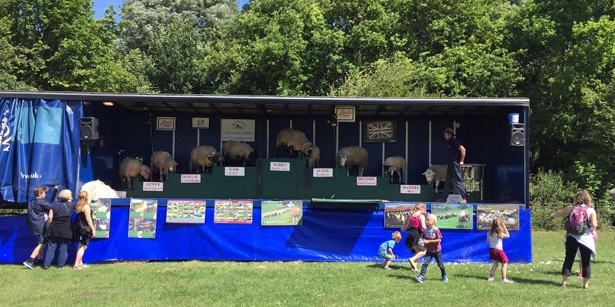 Sheep Show Rare Breeds 2015