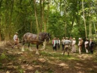 Weald & Downland Museum Shire Horses at Epsom Show 24 June 2015