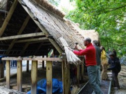 Thatching (11) small