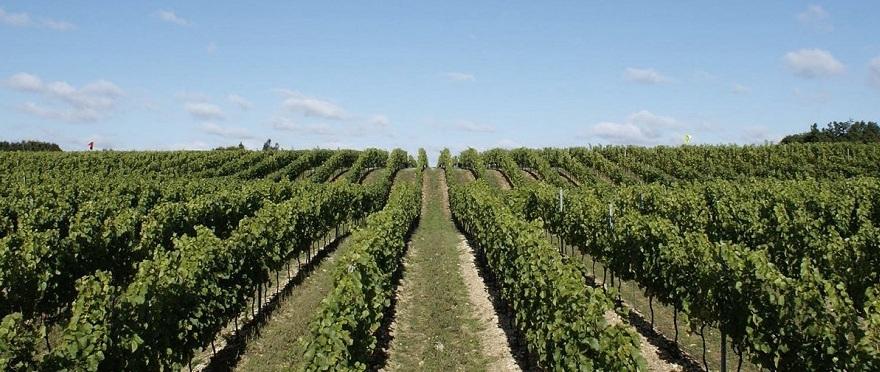 Hattingley Valley Vineyard