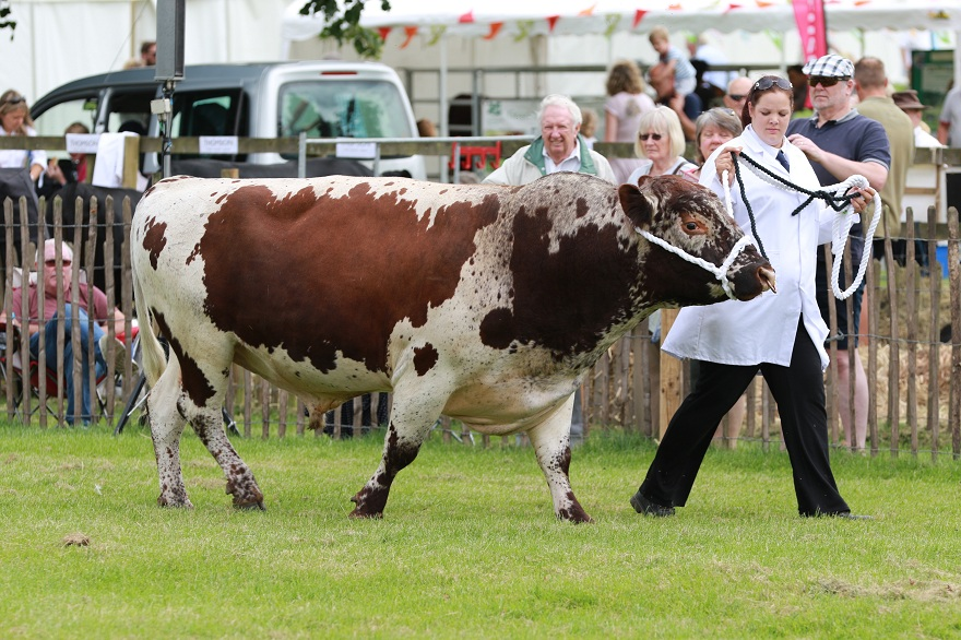 Rare Breeds Show 2016 at the Weald & Downland Open Air Museum