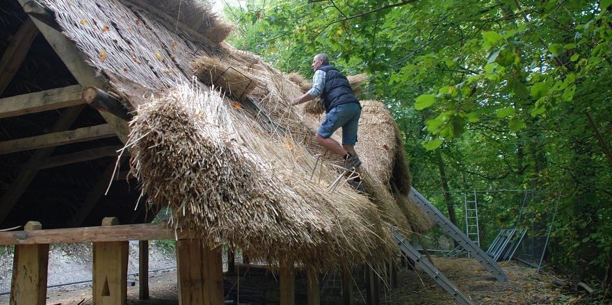 Thatching begins