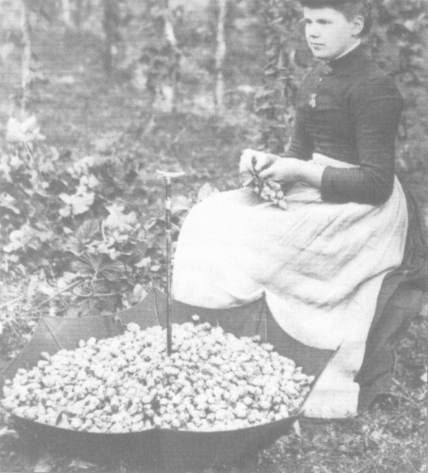 hop-picker-1890