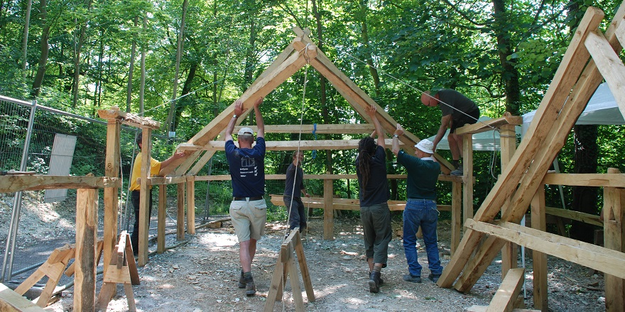 Volunteers lift the roof timbers of the Saxon house into position