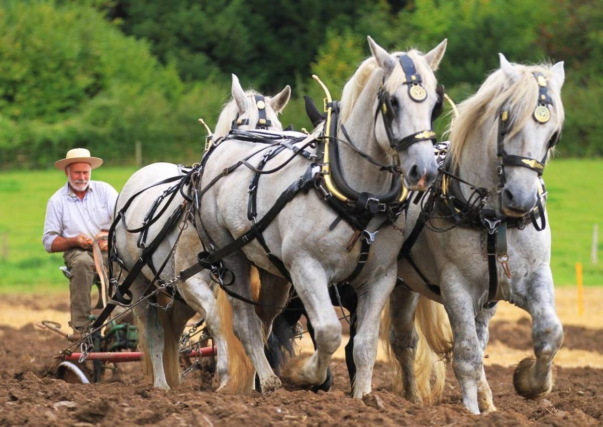 Autumn Countryside Show - Weald & Downland Living Museum