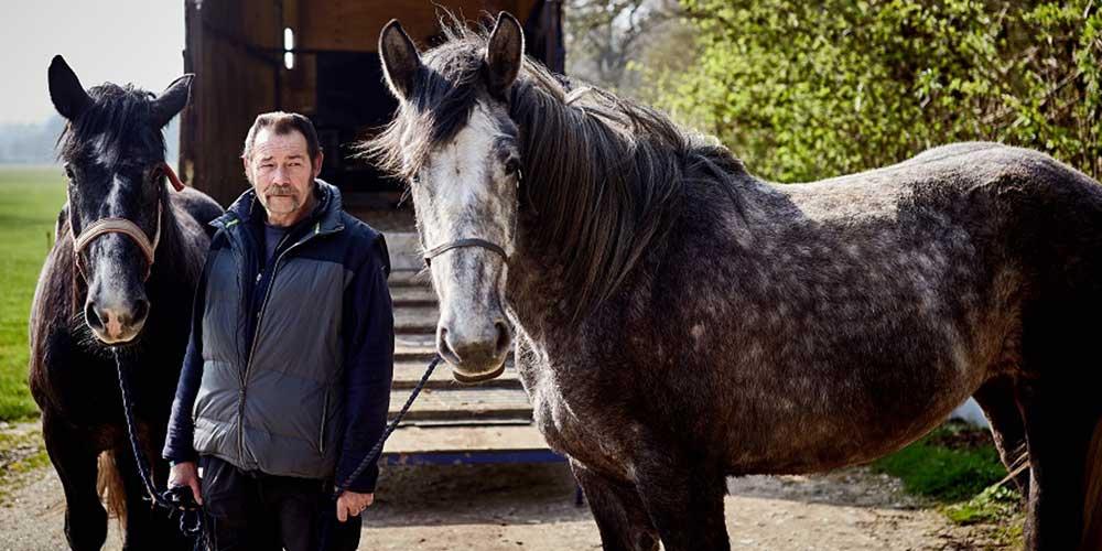 Percheron horse, Olwyn (right)