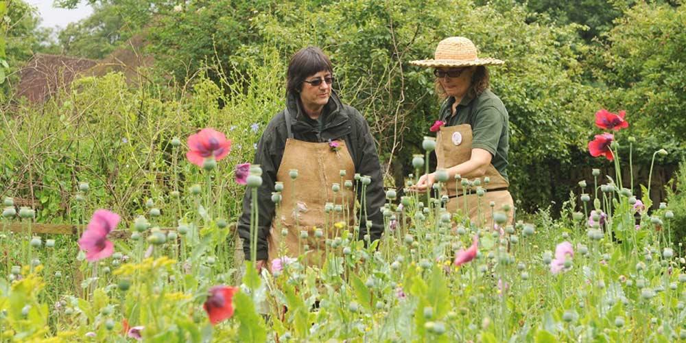 Carlotta and Karen, the Museum's gardening volunteers