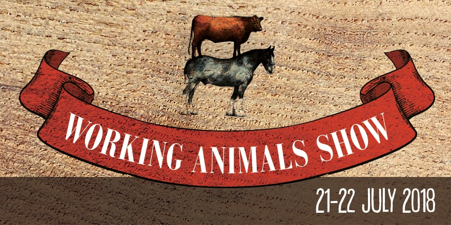 Working Animals Show 2018 Weald & Downland Living Museum Chichester