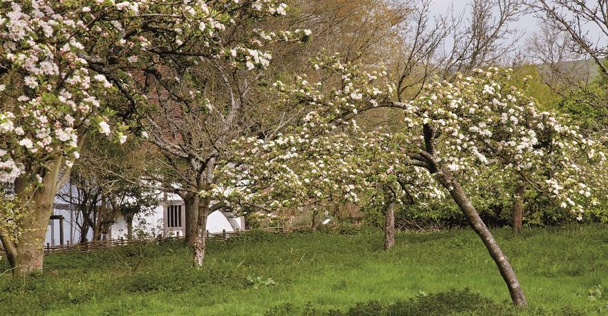 Bayleaf farmhouse orchard Weald & Downland Living Museum