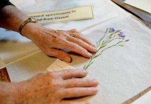 Exhibition: Museum Herbarium