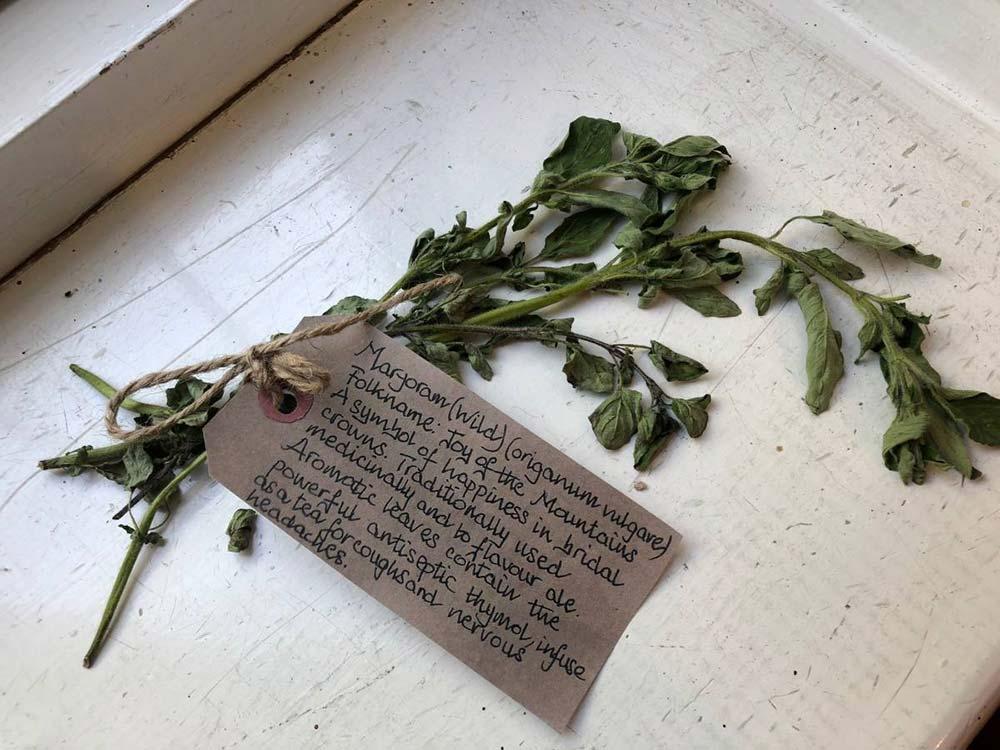 Wild Marjoram herbal remedy from the Herbarium Exhibition