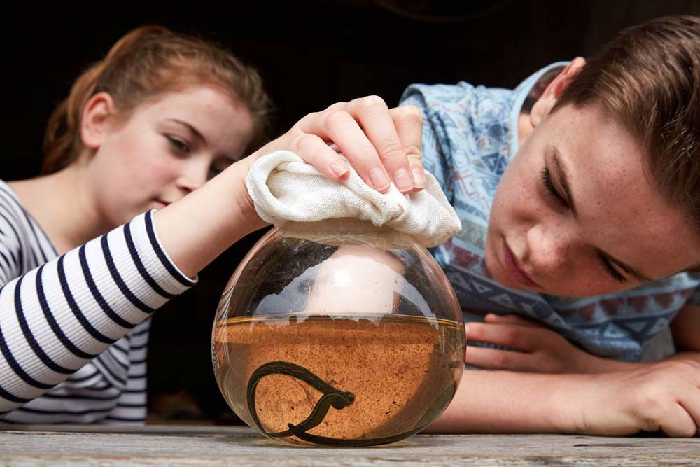 Students inspecting a leech