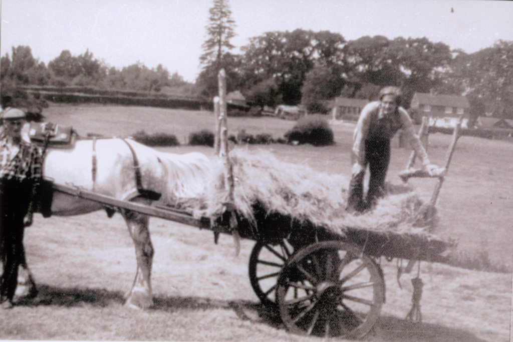 Traditional cart