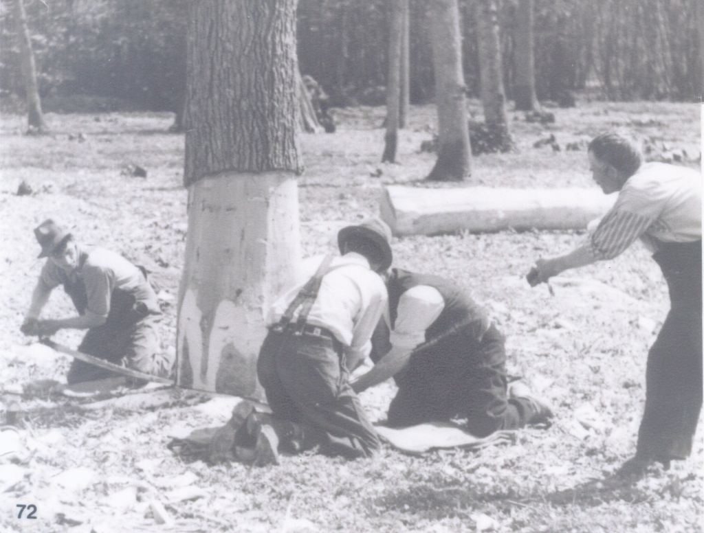 Wood processing felling