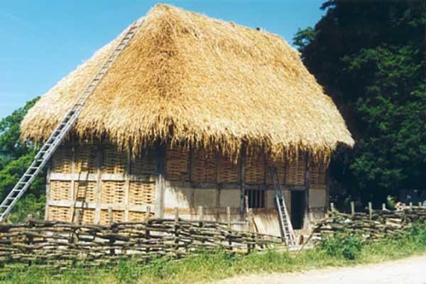 Poplar thatch complete