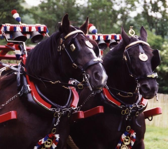 Equine harness