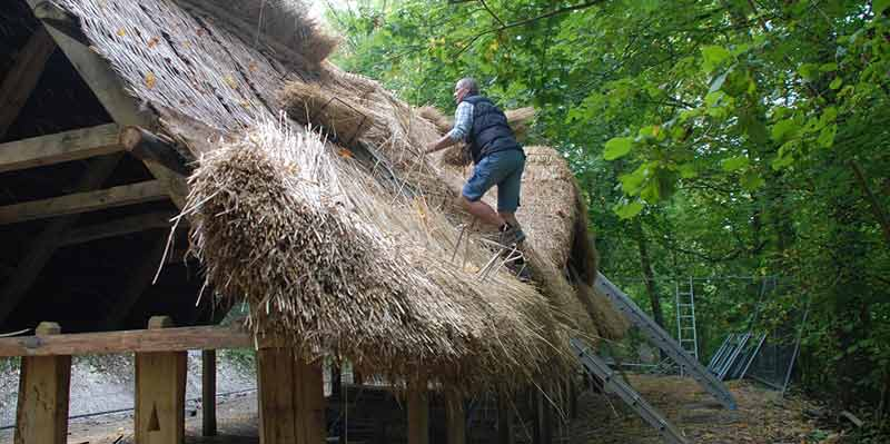 Saxon house construction: thatching