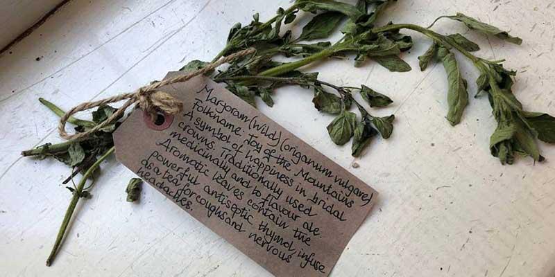 Wild Marjoram herbal remedy