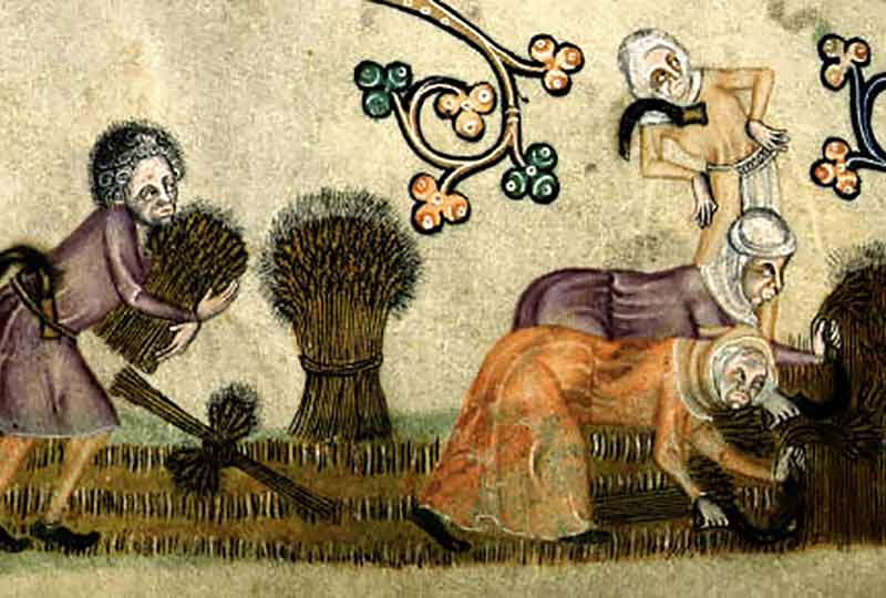 Boarhunt crops (by permission of The British Library)