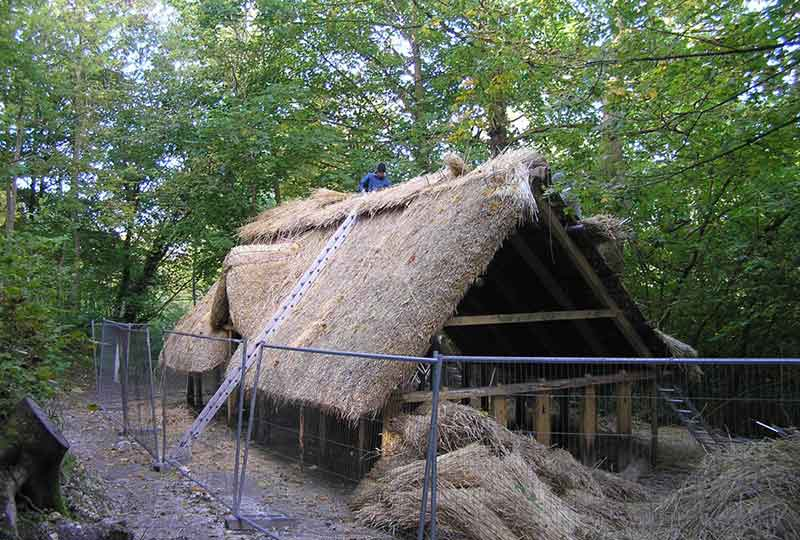 Thatching the Saxon house roof