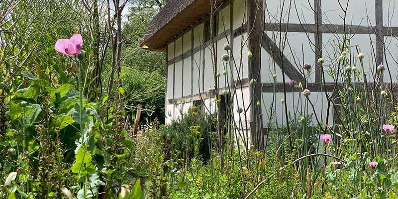 Wildflowers in the Poplar Cottage garden