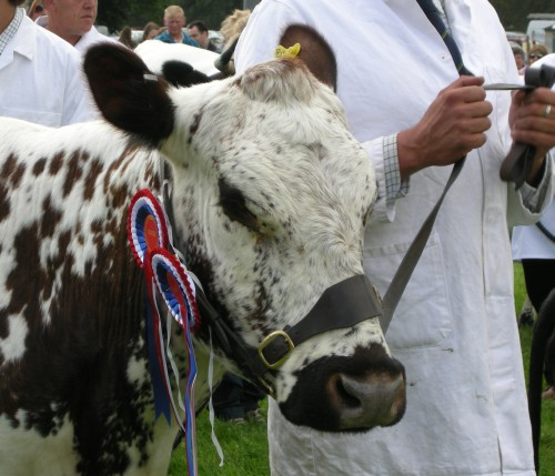 Cattle winner