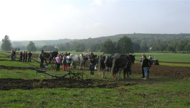 Horses and tractor ploughing in field