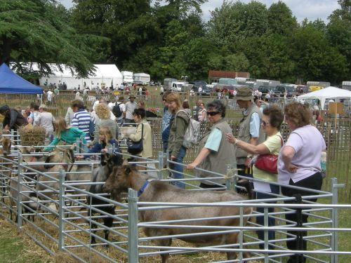 Rare Breeds goats