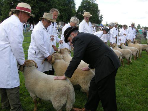 Rare Breeds judging sheep