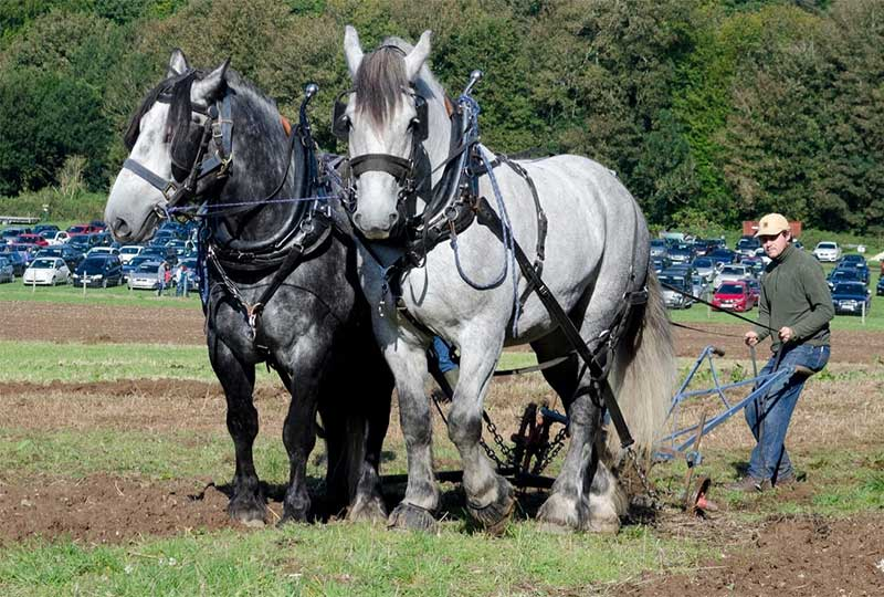 Agriculture: the role of horses