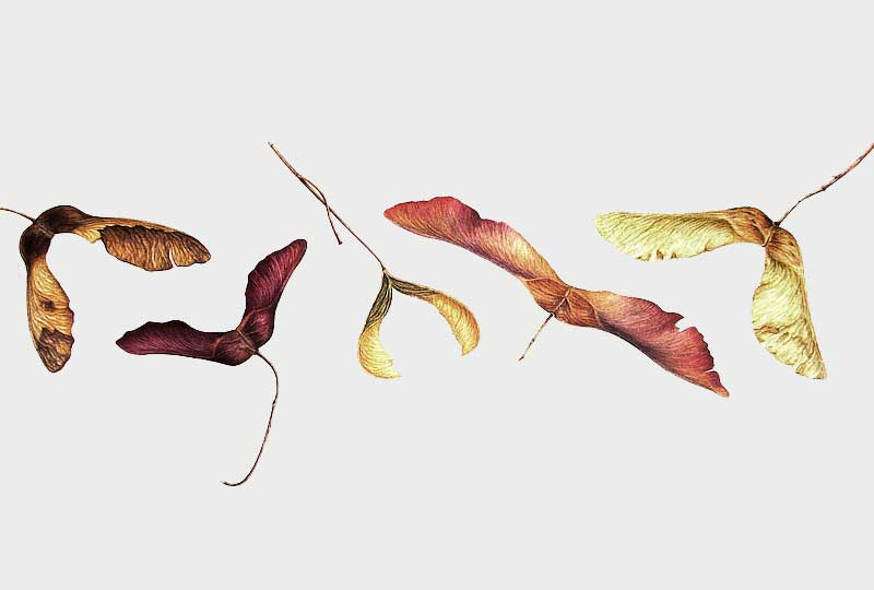Botanical illustration the Autumn garden course
