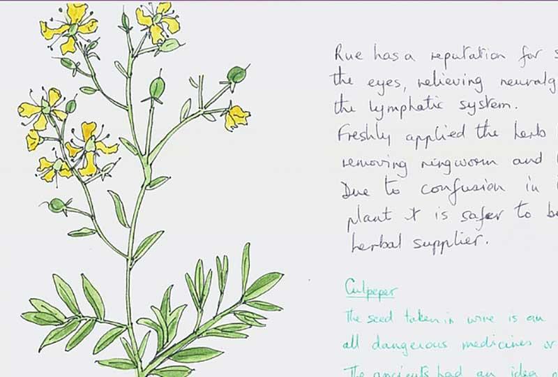 Herbs in healthcare