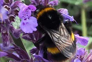 Bee on flowers