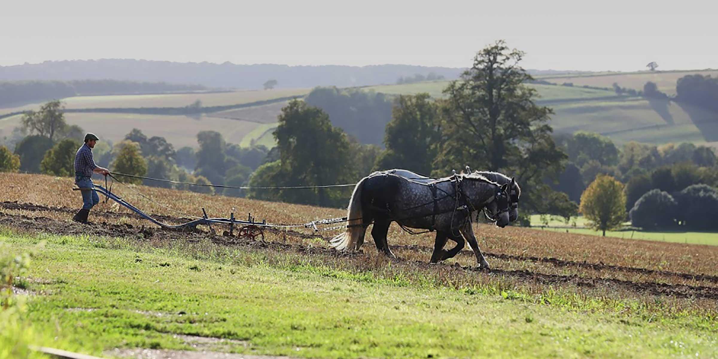 Farming and livestock