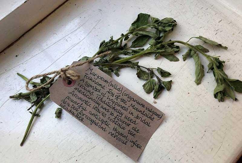 Wild marjoram herb exhibit
