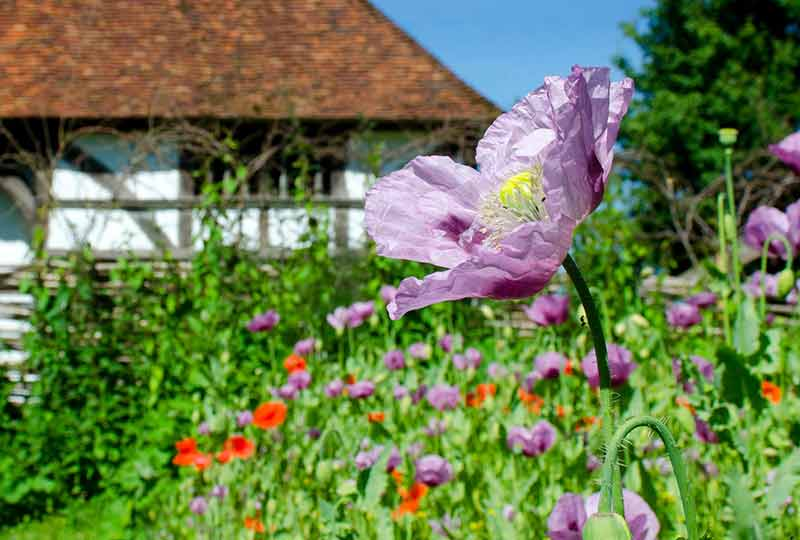 May Day event at the Weald & Downland Living Museum