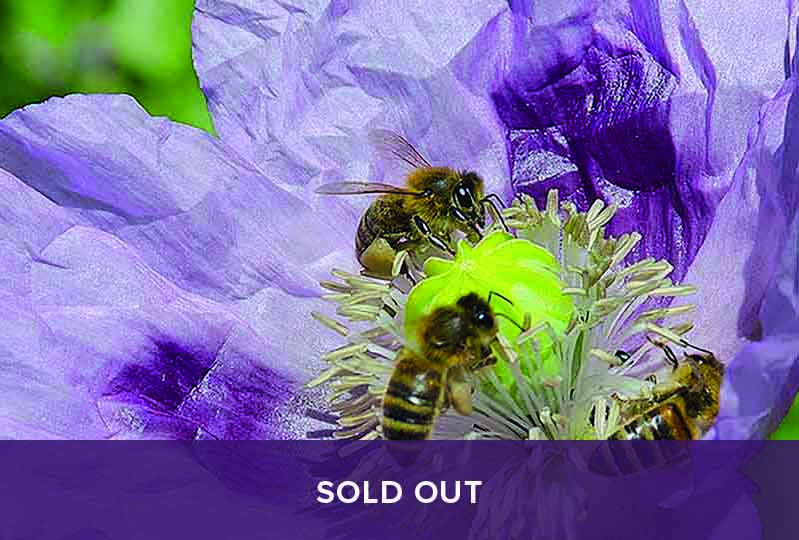 Bee Keeping Course - sold out