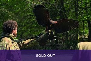 Sold Out - Introduction to Falconry