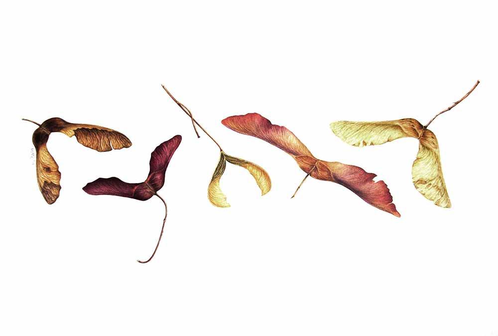 Botanical-illustration