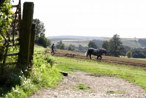 Care and management of Heavy Horses