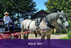 Sold Out = Driving Heavy Horse course