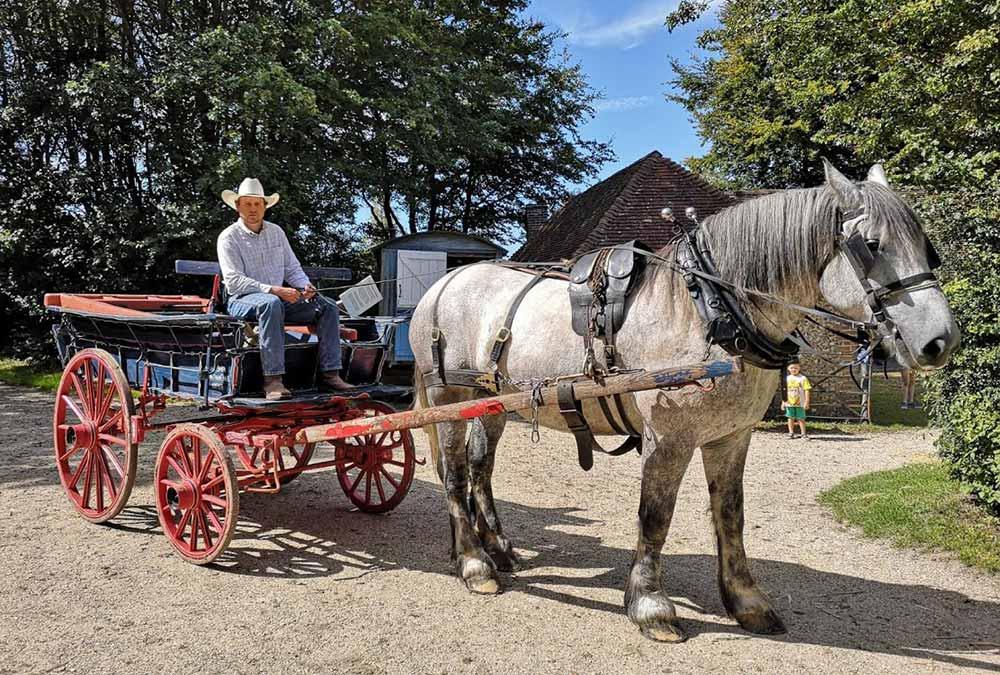 Driving heavy horses