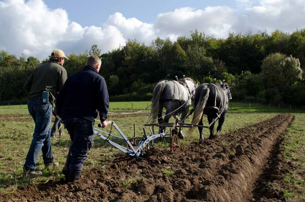 Ploughing with heavy horses