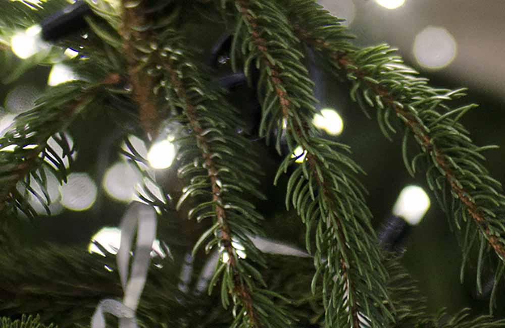 Christmas fir with lights